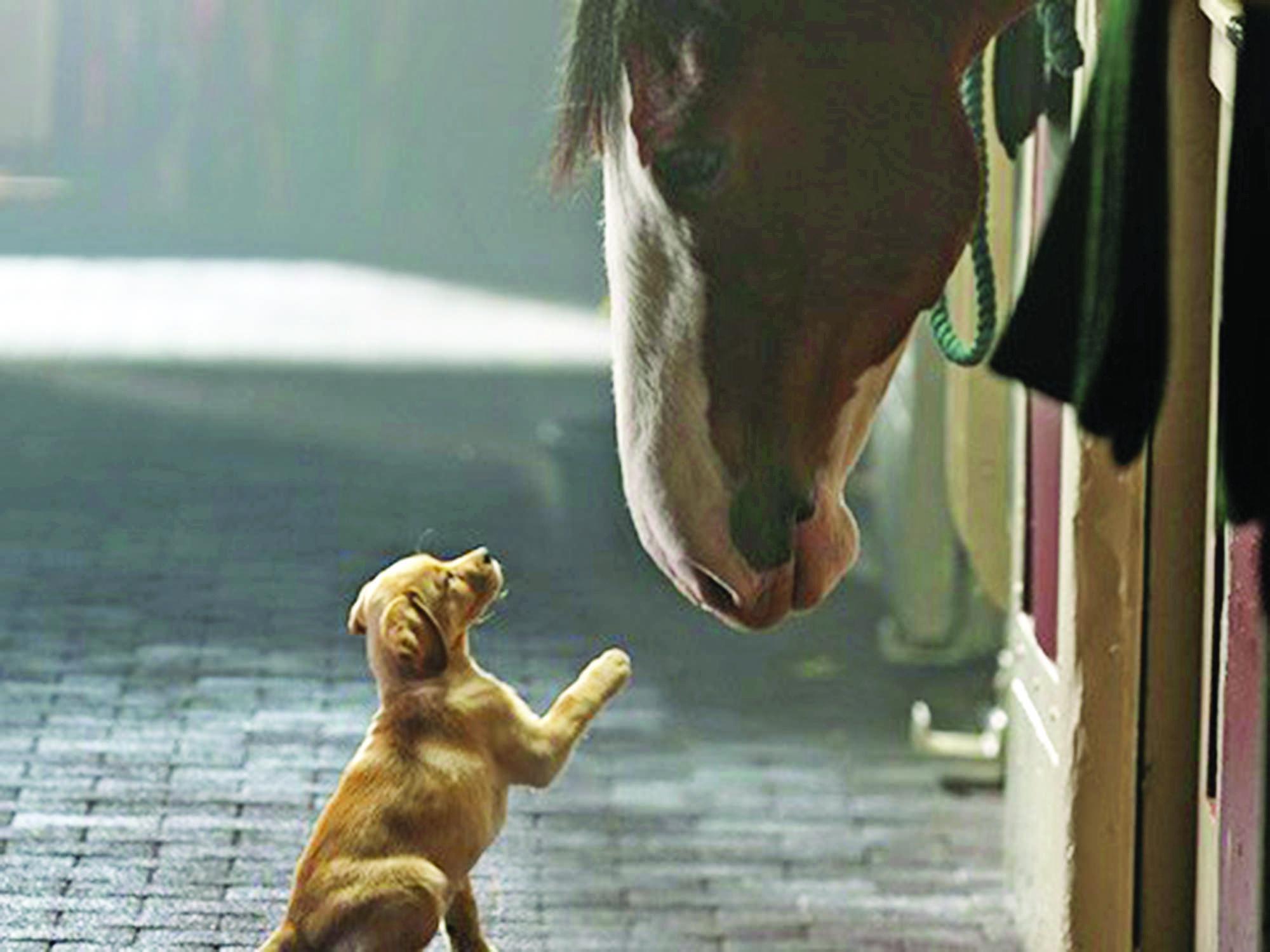 Best Superbowl Commercial  Best Buds Dog And Horse Budweiser